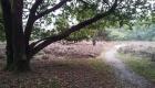 Heideveld-Paardeslenkte